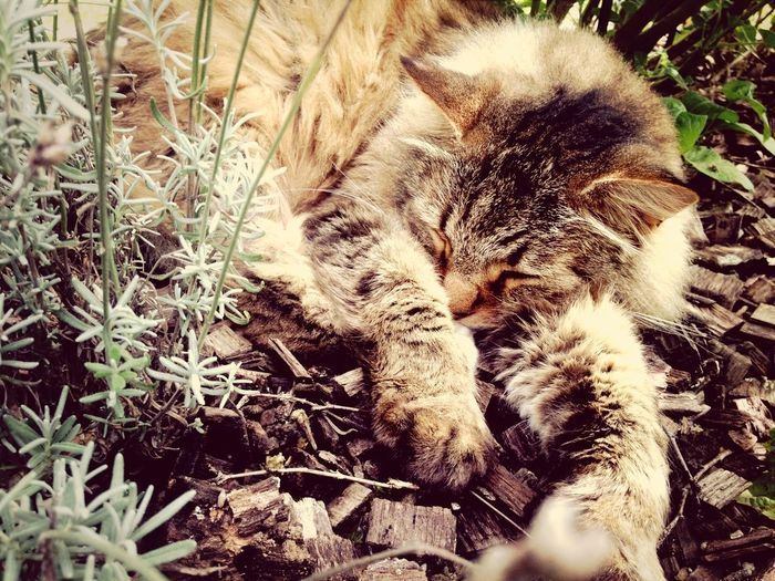 My sweety cat sleeping in the flowers.