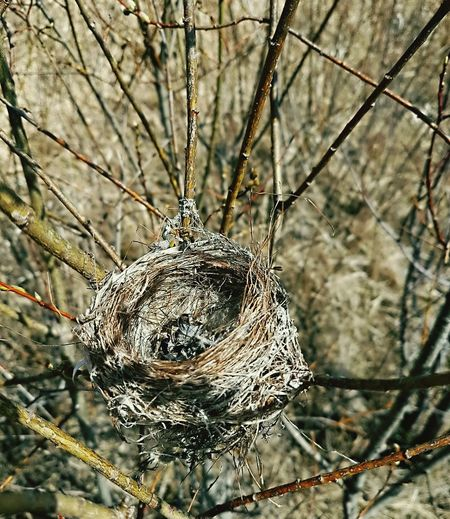 Prime Rural real-estate available for immediate occupancy... Vacant Nest Nid Empty Nest Flew The Coop Bird HouseDried Leaves Bare Tree Branches Nature's Diversities Home Is Where The Art Is Place Of Heart Perspectives On Nature