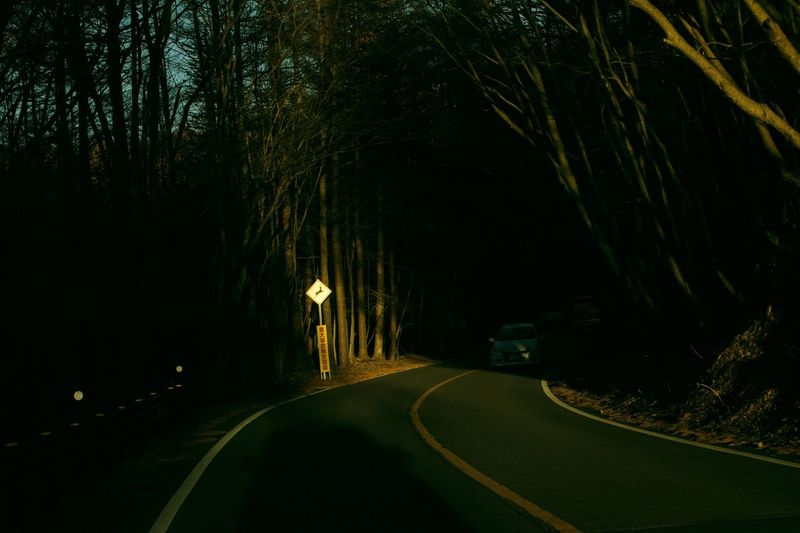 Road amidst trees at night
