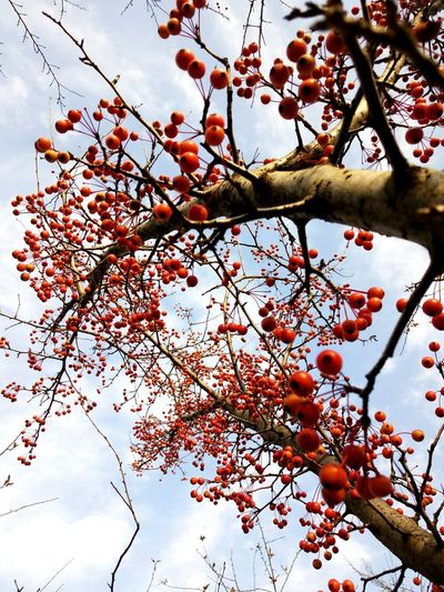 Tree Redfruits Winter Trees Closeview EyeEmNewHere