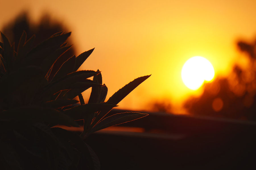The orange in the sky is not by the sunset, it's by the forest fires in Chile and the smokes reach this little town... Beauty In Nature Close-up Day Leaf Medlar Nature No People Orange Outdoors Plant Siluet Sky Sun Sunset Tree