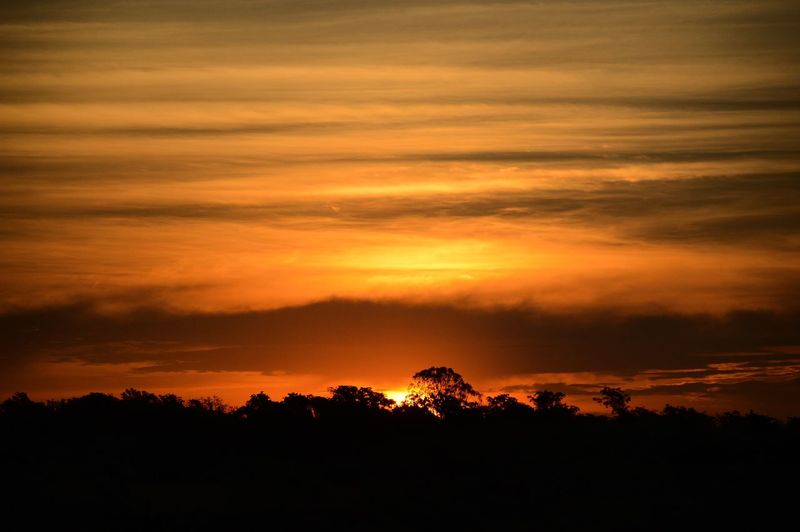 Silhouette Sunset Nature Beauty In Nature Tree Sky Tranquility Scenics No People Cloud - Sky Outdoors Sunrise