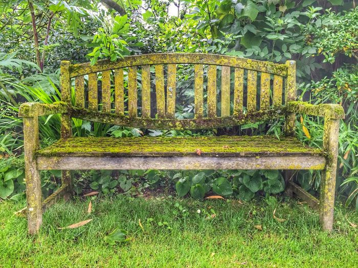 Nature Nature_collection Nature Photography Naturelovers Nature On Your Doorstep Naturephotography Nature Textures Green Green Color Green Green Green!  Green Nature Moss Mossporn Moss & Lichen Mossy Moss-covered Bench Old Bench Banc Vieux Banc Vieux