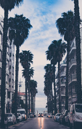 Palm trees by sea against sky in city