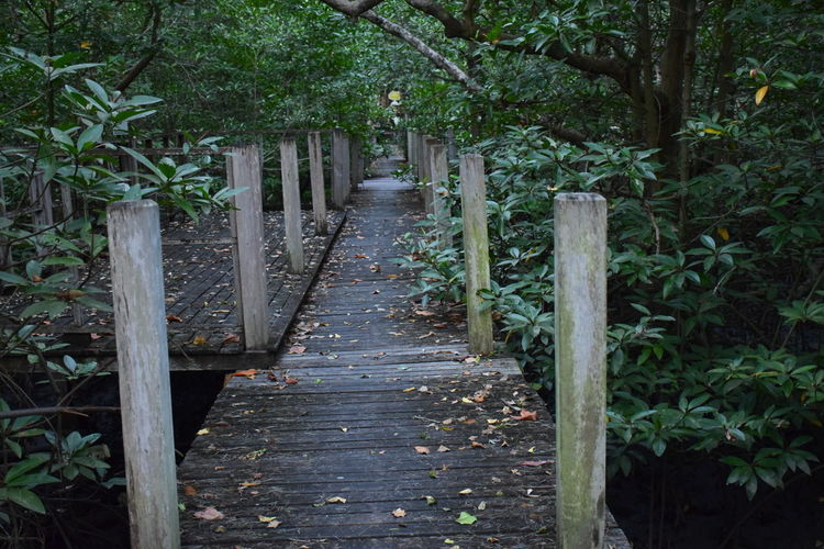 Walkway amidst plants and trees
