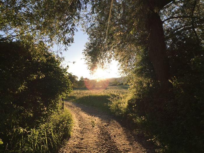 Rheingau Riesling Nature Abendstimmung Sunlight Hattenheim