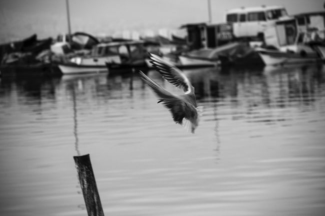 Birds Bird Photography Eyem Best Shots Izmir Turkey Photography Photo Photooftheday Streetphotography Streetphoto_bw Canon Canon60d Konak Konak Meydanı Sea Seaside Iskele