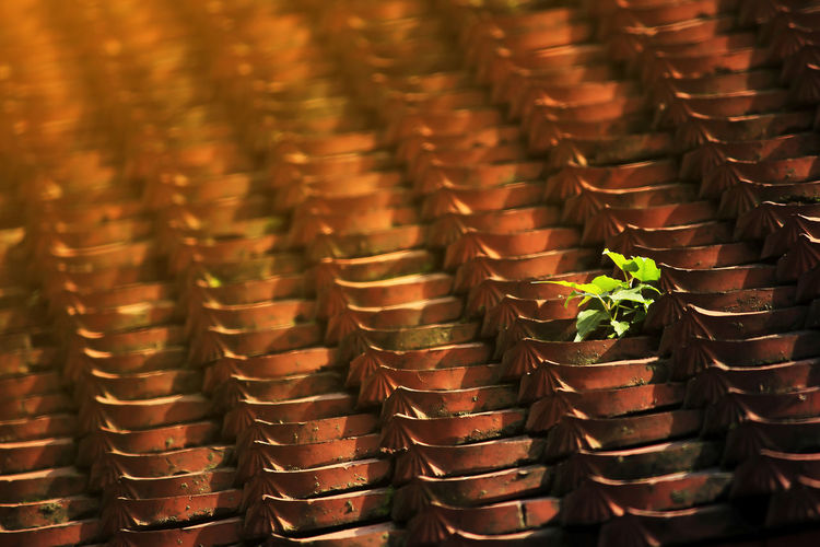 Clay roofing sheets Abundance Arrangement Backgrounds Brown Close-up Container Full Frame Growth In A Row Indoors  Large Group Of Objects Nature No People Pattern Plant Repetition Selective Focus Side By Side Stack Still Life