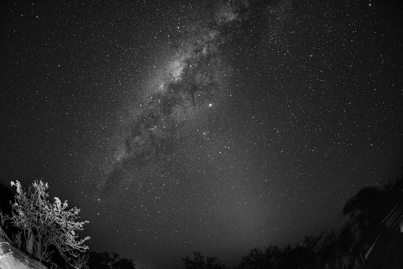 Low angle view of trees and the milky-way against sky at night