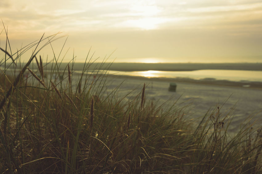 sunset at the beach, with golden sky and grass in the front Calm Calmness Beach Beauty In Nature Day Grass Growth Nature No People Outdoors Scenics Sea Sky Sunset Tranquil Scene Tranquility Vintage Water