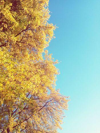 Goldpolishautumn Clear Sky Sky Close-up