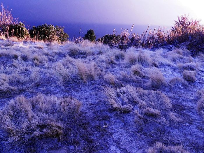 Hoarfrost meadow with morning light Cold Nepal Hoarfrost Meadow Field Mountain Poon Hill Morning Light Dawn Winter