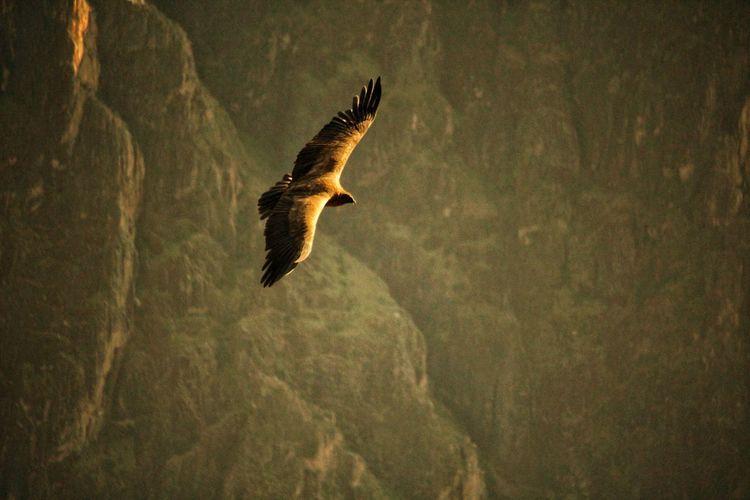 The Condor Cóndor  Bird Bird Of Prey Flying Galaxy Animal Themes Close-up