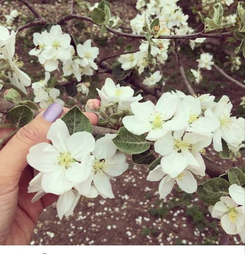 Spring... Flower Blossom