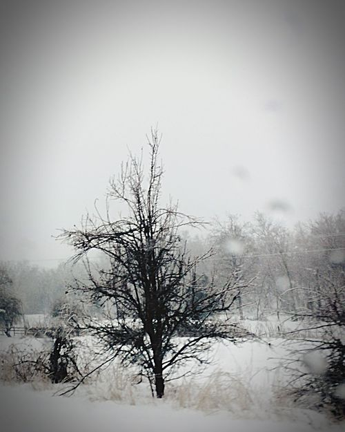 Snowstorm2016 EyeEm Nature Lover Snowy Field Eyemnaturelover Snowday Mothernature Let It Snow Ice Snow Window Beautiful Day Tree Frozen Window Nature_collection Passenger Side View Passenger View