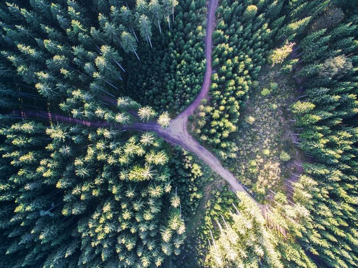 Aerial View Agriculture Beauty In Nature Black Forest Day Forest Freshness German Germany Green Color Growth Landscape Nature No People Outdoors Plant Rural Scene Scenics Tranquil Scene Tranquility Tree Break The Mold EyeEmNewHere Summer Exploratorium
