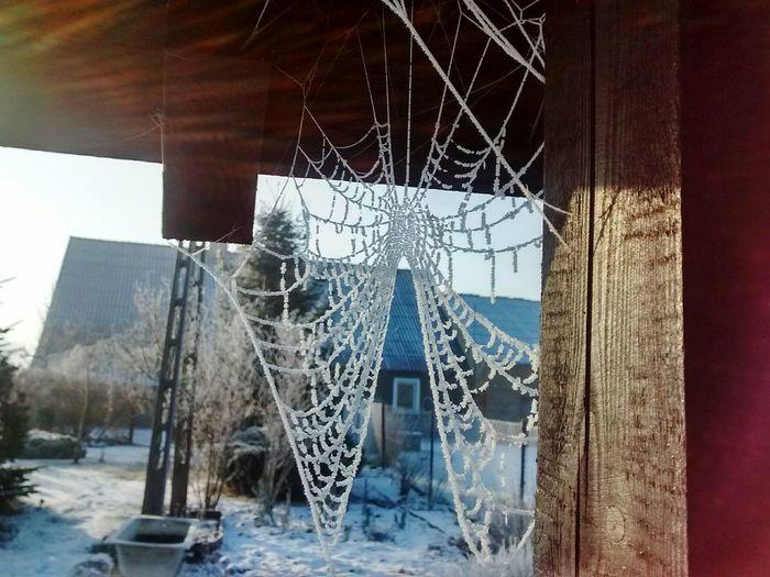 Spiderweb Winter Hoarfrost Snow Nature Nature_collection EyeEm Nature Lover Beauty Winter Wonderland EyeEm Poland