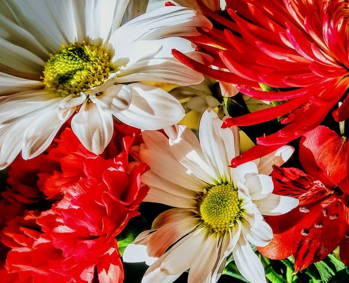 Flower Petal Fragility Flower Head Beauty In NatureIrwin Collection EyeEm Gallery Chrysanthemum Flower Daisy💜 Boquet Of Flowers Red Flower White Flower Growth Nature Freshness Pollen Plant No People Red Stamen Close-up Blooming