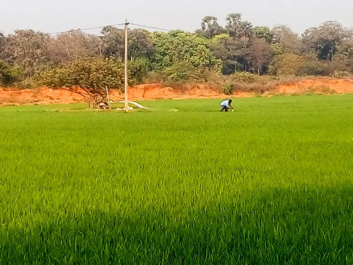 Agriculture Agriculture Photography Agricultural Land AgriculturalDetail Agriculture Way Agriculture Farm Go Green Agricultural Farmer Of New Generation Natural Beauty Natural Photography EyeEm Best Shots - Nature EyeEm Best Shots EyeEm Nature Lover Farmer In His Fields Farmer Style