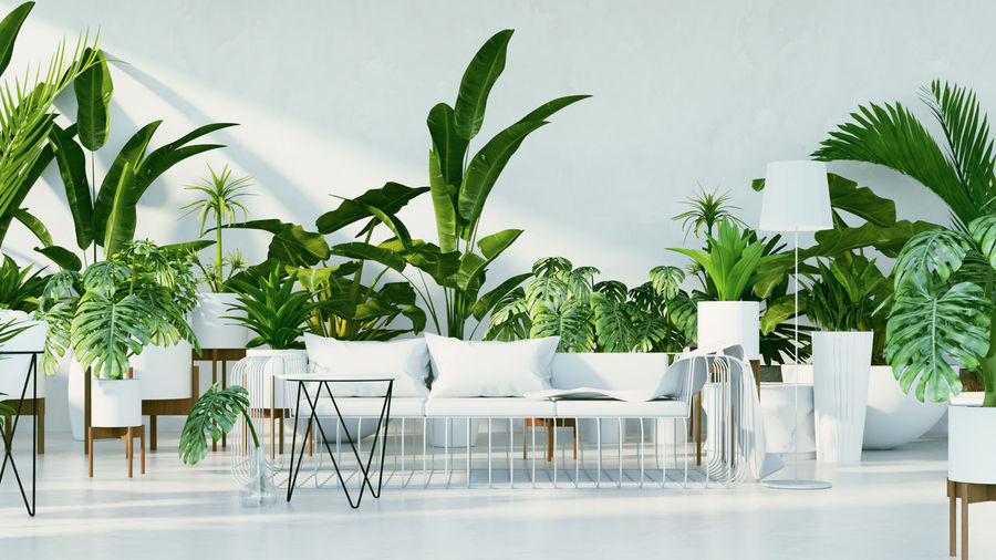 Botanical interior - Tropical design living room / 3D render image Chair Plant Seat Growth Table Potted Plant Nature No People Furniture Green Color Absence Day Leaf Plant Part Houseplant Empty Indoors  Business Architecture Setting Interior Design Botanical Garden Tropical Living Room Modern Architecture