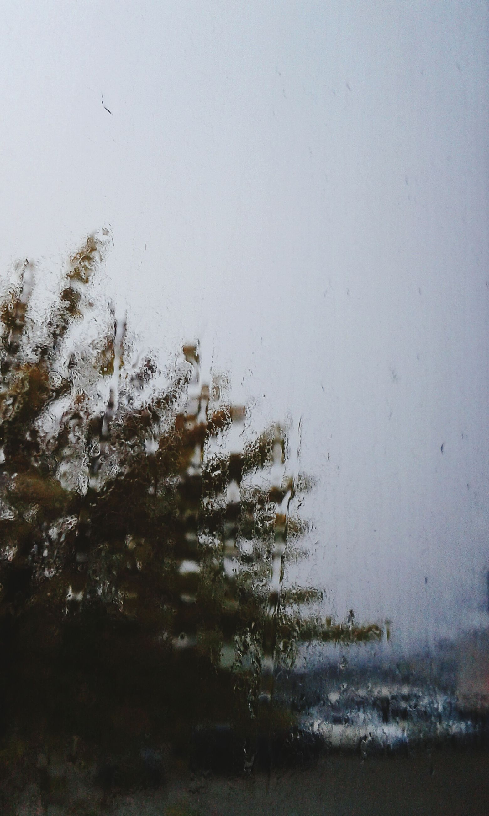 water, drop, wet, clear sky, weather, tree, nature, season, sky, rain, growth, tranquility, window, beauty in nature, transparent, day, copy space, no people, plant, glass - material