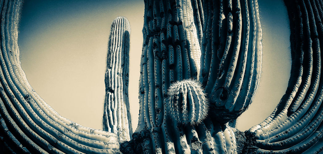 Full Frame Cactus Collection Scottsdale, AZ Arizona Snapseed Hello World Desert Samsungphotography Eye4photography  Klique Klique EyeEm Nature Lover Saguaro Cactus Beauty In Nature Check This Out The Great Outdoors - 2017 EyeEm Awards Shades Of Winter