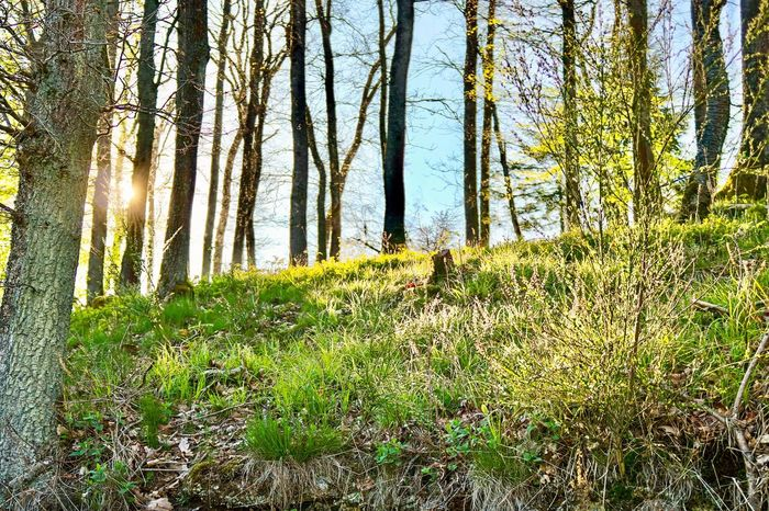 Nature Tree Grass Growth Forest Tranquil Scene Beauty In Nature Day Tranquility Outdoors Scenics Tree Trunk Landscape No People Sky Animal Themes Mammal