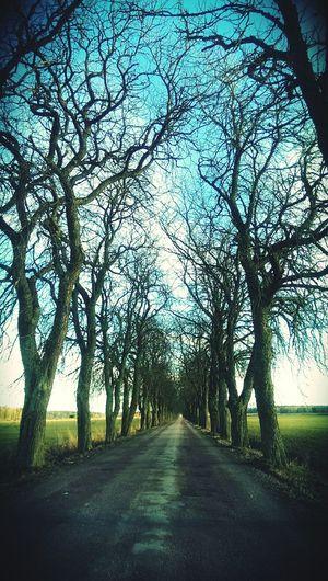 Road Trees Julita Sweden Sverige Picoftheday Spring
