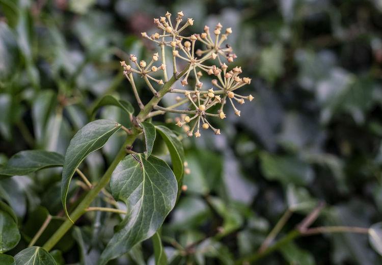 Hedgerow Growth
