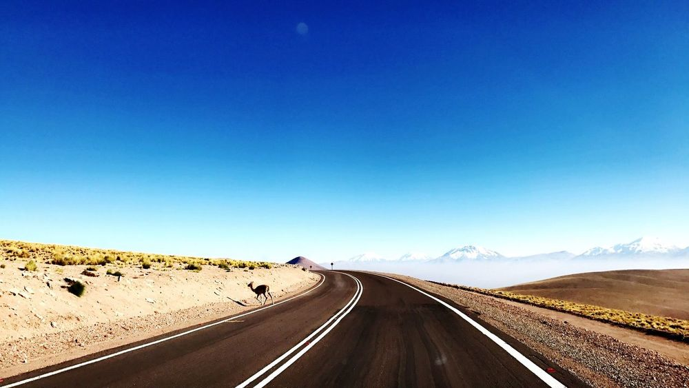 Road Blue The Way Forward Landscape Clear Sky Transportation Scenics Nature Non-urban Scene Day Tranquility Sunlight Mountain Outdoors Beauty In Nature Sky No People Winding Road