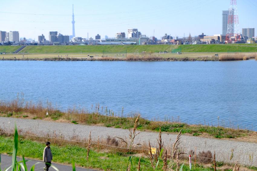 Fujifilm Fujifilm X-E2 Fujifilm_xseries Japan Japan Photography River Riverside Tokyo Sky Tree スカイツリー 天空樹 川 江戸川河川敷