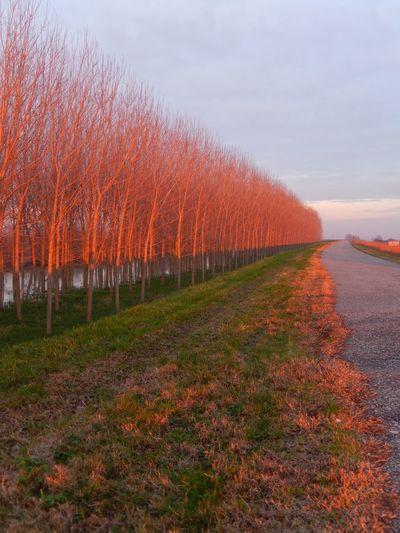 Sunset on the poplars Poplars River PO Sunset