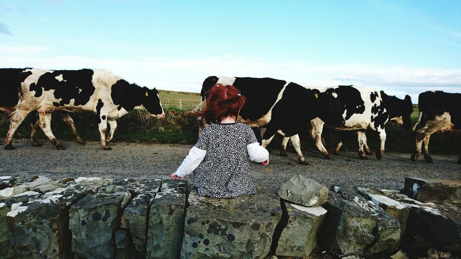 Rear view of child sitting on stone wall next to cows walking on country road