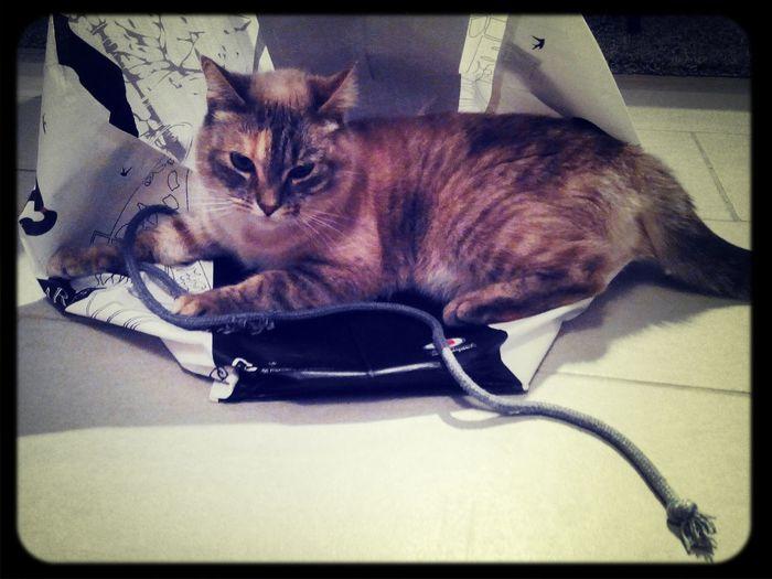 Confort 4 étoiles. Cat♡ Relaxing Mon Chat ♡ Enjoying Life
