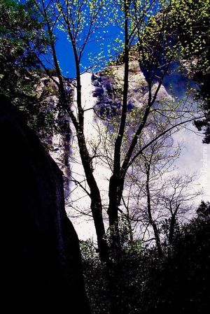 Yosemite National Park, California Waterfall Silhouette Beauty In Nature Outdoors WoodLand Nature Photography Eyemphotography Eye4photography  In This Beautiful Place Fine Art Photography EyeEm Best Shots Beauty In Nature Nature_collection My Favorite Place