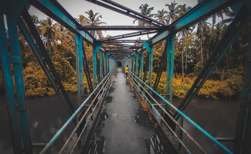 Bridge amidst trees