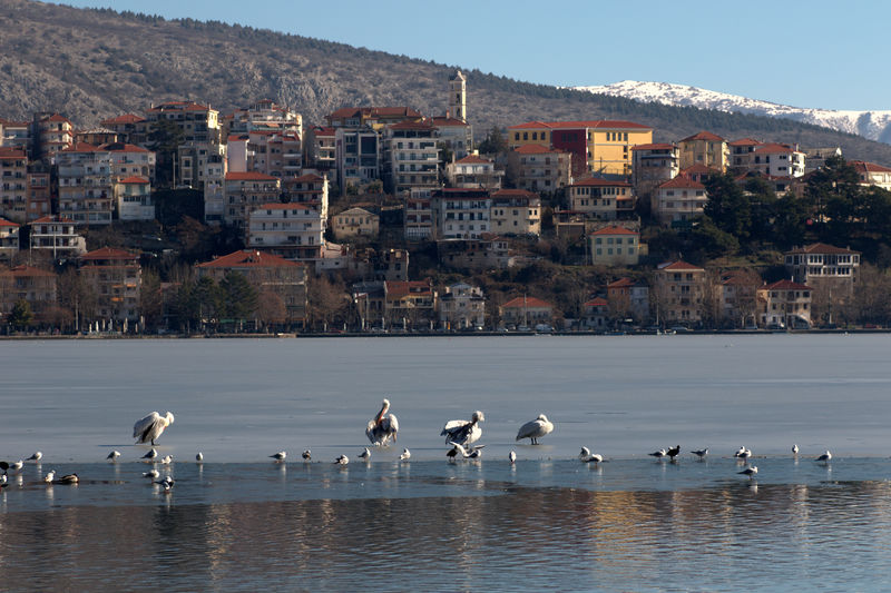 Flock of seagulls by lake against buildings in city