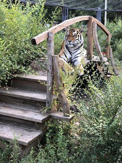 Cat relaxing in a zoo