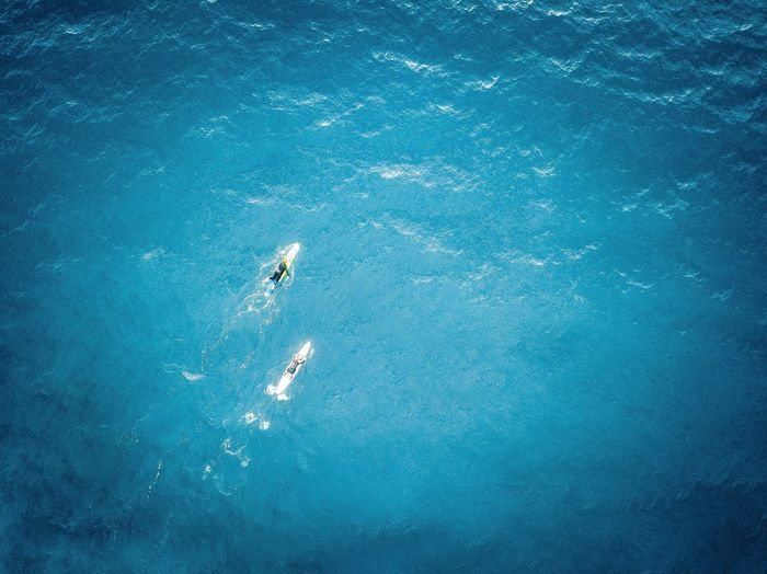 Water Sea High Angle View Swimming Underwater Nature Day Aquatic Sport Sport UnderSea Outdoors Blue Real People Lifestyles Leisure Activity People Animal Wildlife Marine Swimming Pool
