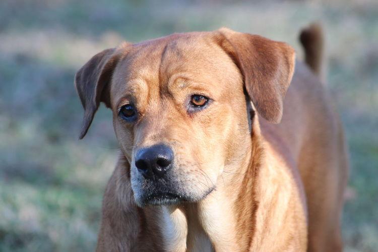 Canine Dog Pets