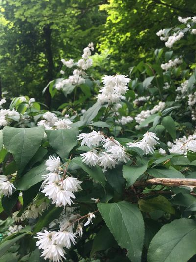 White Flower Plant Growth Flowering Plant Flower Beauty In Nature Day Nature Fragility No People Close-up White Color Freshness Plant Part Vulnerability