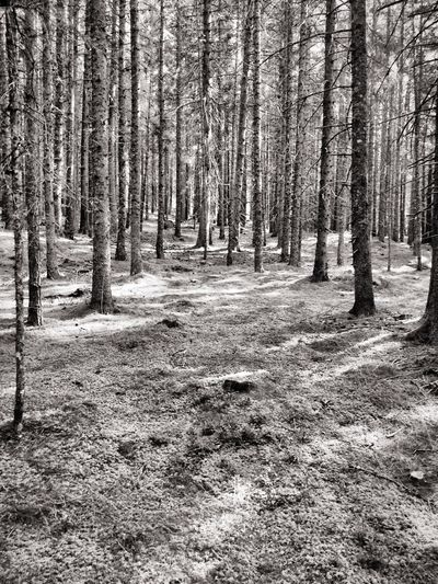 Into the woods Wood Woods Bosco Blackandwhite