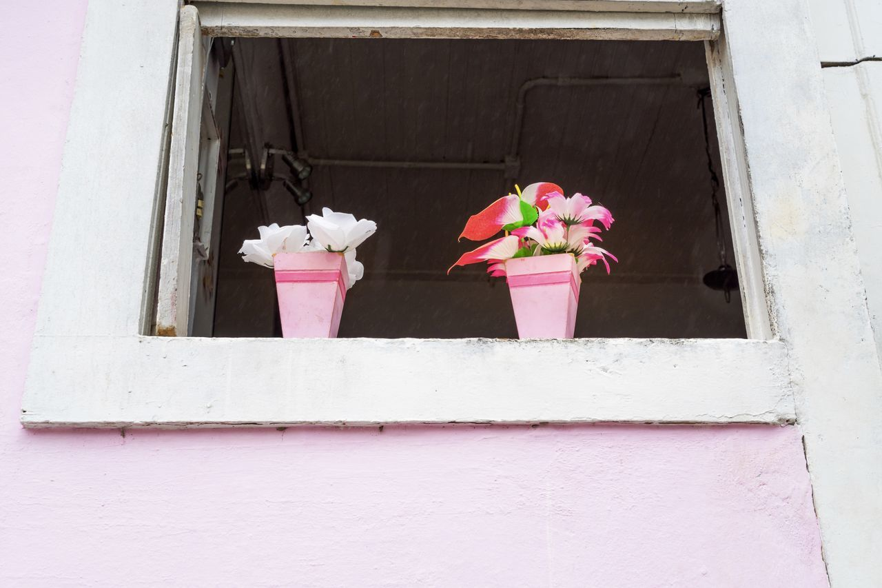 pink color, flower, flowering plant, plant, no people, architecture, built structure, nature, building exterior, freshness, day, fragility, vulnerability, window, beauty in nature, wall - building feature, potted plant, outdoors, building, growth, flower pot, flower head, purple