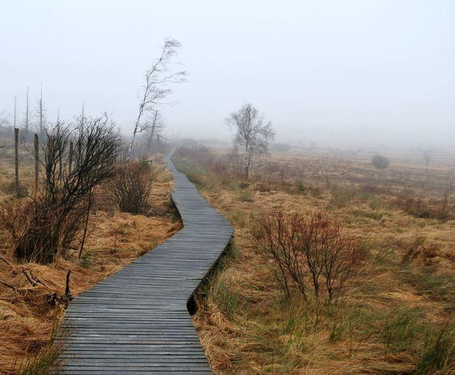 Ardennes Belgium Ardennes Belges Signal De Botrange Slatted Floor Wet Zone Wetland Winter Bog Mist Moors Peatlands Vegetation Wet Area