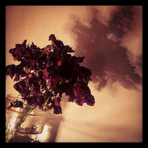 Flowers I got for mommy.<3 Dead Beautifulinitsownway Ruvidiadulcinearobinsonphotography
