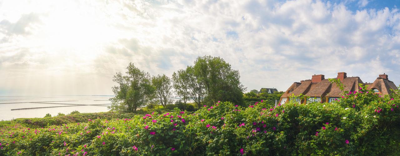 Flowering plants by trees against sky