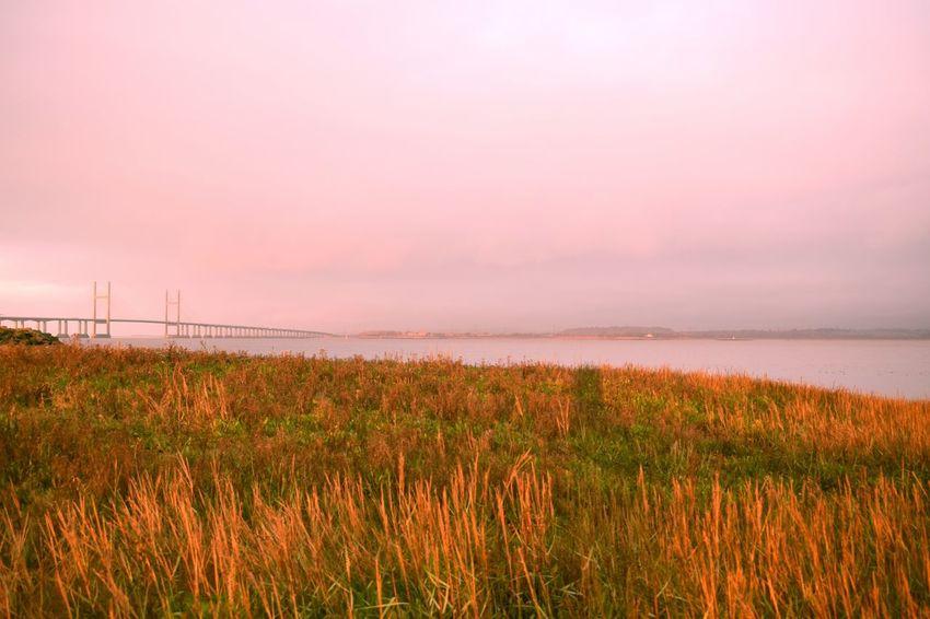 Nature Beauty In Nature Scenics Sunset Grass Tranquility Water Sky Tranquil Scene Outdoors Growth Field Plant No People Landscape Sea Day Bridge Bridge - Man Made Structure Severn Bridge Severn Beach Bristol, England U.K.