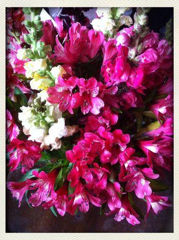 Astromelias Flowers