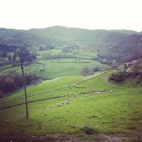 Pascolodipecore Tuscany Landscape Italy barberinomangona pratoverde