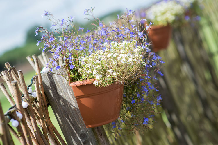 Decorations of potted plant hanging on a wooden fence